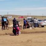 Schapen slachten in Mongolië!