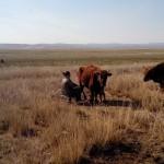 Vrouw melkt koeien in Mongolië! Foto: Ruud Boon