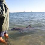 Dolfijnen show!